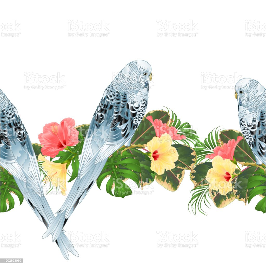 Tropical border seamless background Budgerigar, blue pet parakeet  and various hibiscus vector Illustration for use in interior design, artwork, dishes, clothing,  greeting cards vector art illustration