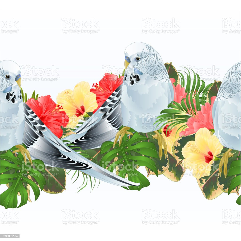 Tropical border seamless background Budgerigar, blue pet parakeet  and hibiscus vector Illustration for use in interior design, artwork, dishes, clothing,  greeting cards vector art illustration