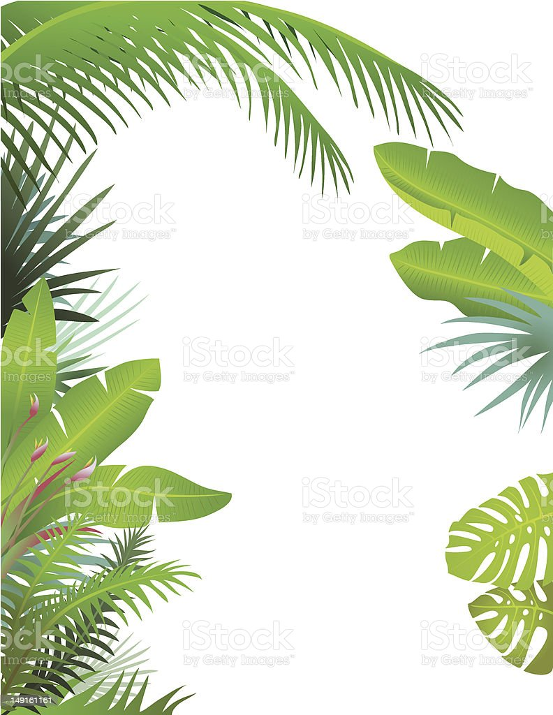 Green Leaf Border Line Tropical Border Stock ...