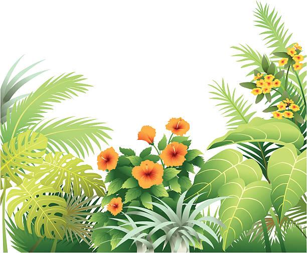 tropischen hibiskus grenze mit orange - hibiskusgarten stock-grafiken, -clipart, -cartoons und -symbole