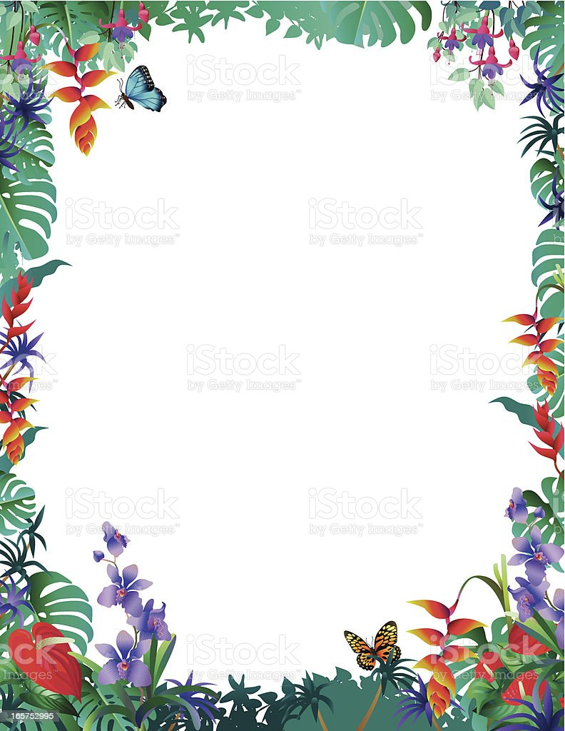 Tropical Border With Orchids Stock Illustration Download