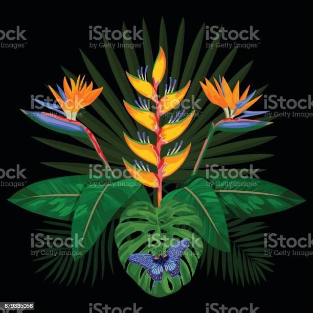 Tropical bouquet composition vector id679335056?b=1&k=6&m=679335056&s=612x612&h=g5j1ow9w tneuopton0xccsk8dmxvlz c7qfvsmnew0=