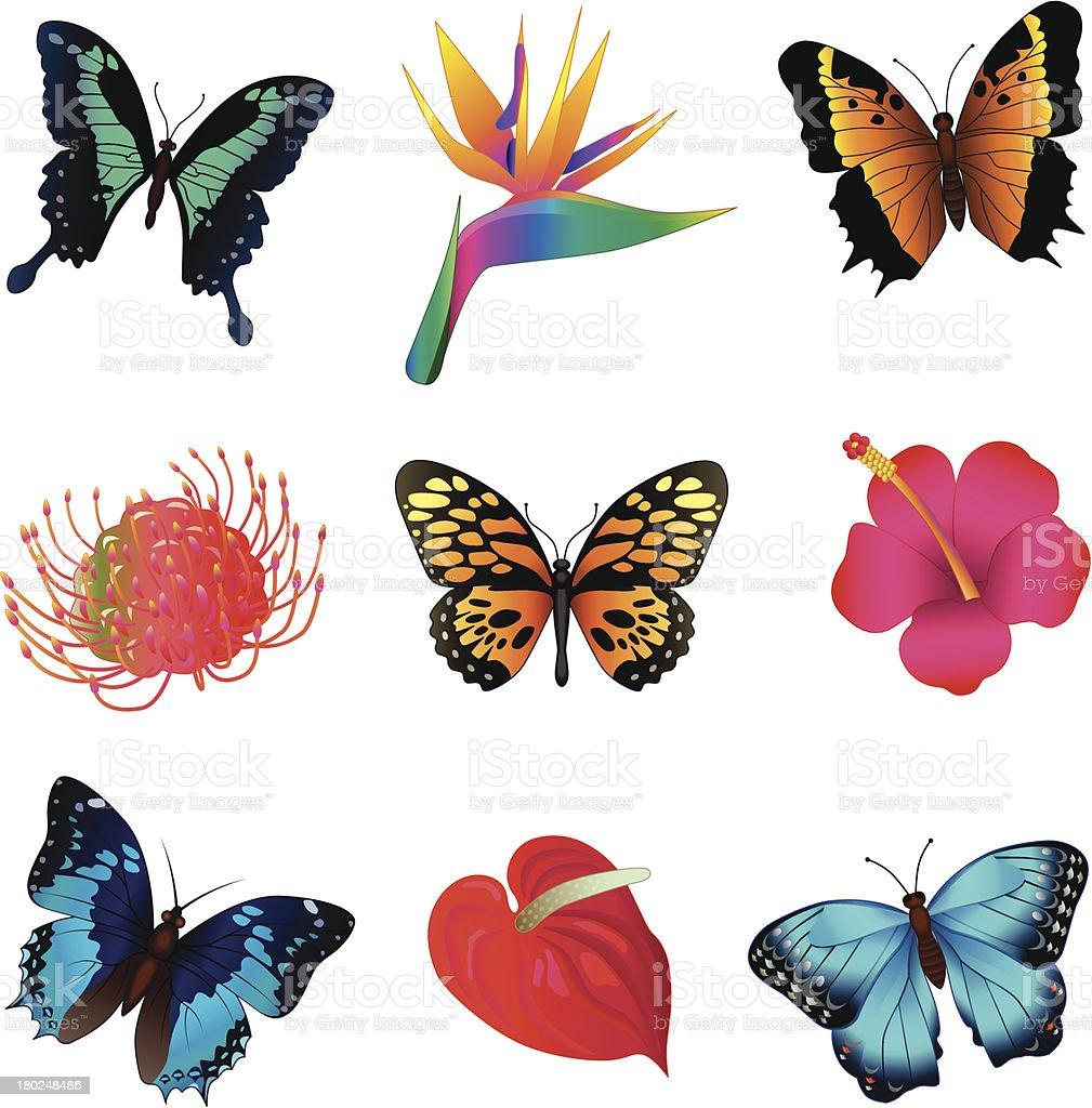 tropical butterflies and flowers stock vector art 180248486 istock