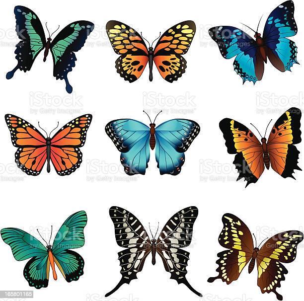 Tropical butterflies vector id165801165?b=1&k=6&m=165801165&s=612x612&h=bfue9jbh75ojium9biibcwb91i xcddw68qxlyk1kym=
