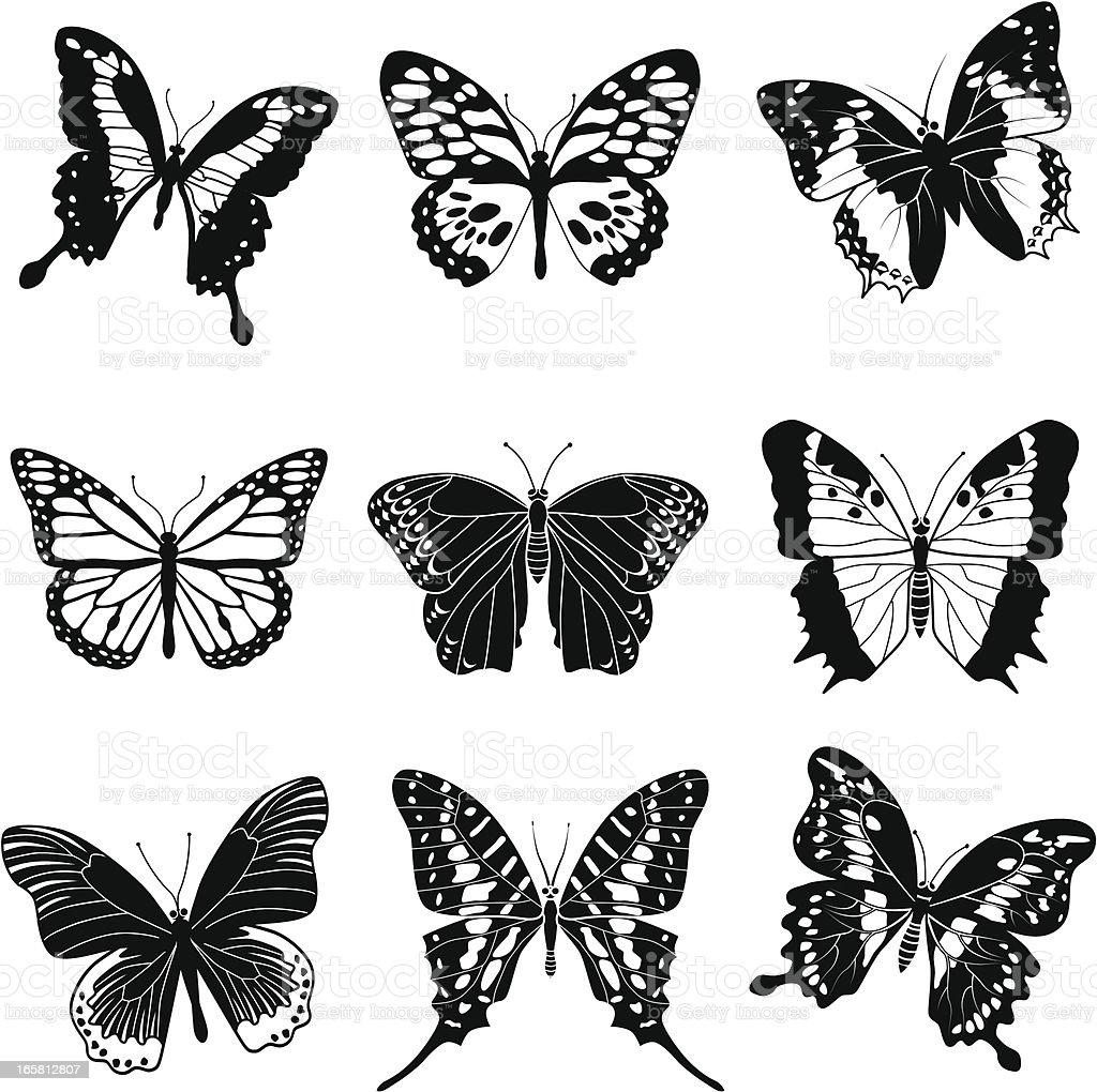 tropical butterflies vector art illustration