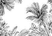 Tropical card with palm trees and leaves. Black and white. Hand drawn vector illustration.