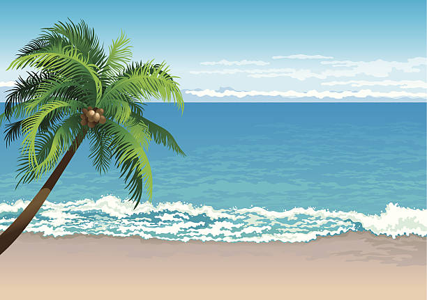 tropical coast Vector illustration  of coconut palm tree on a beach - Horizontal format oceania stock illustrations