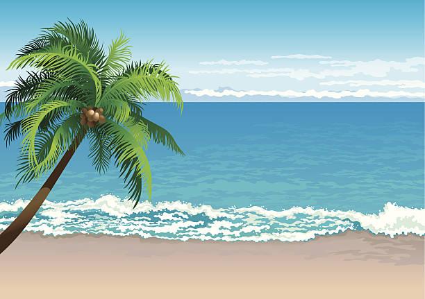 bildbanksillustrationer, clip art samt tecknat material och ikoner med tropical coast - stillsam scen