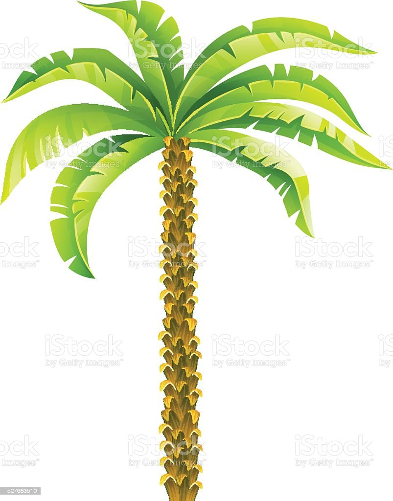 tropical coconut palm tree with green leaves vector illustration rh istockphoto com palm tree leaf silhouette vector palm tree leaves vector free