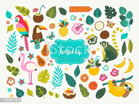 Set of tropical plants and animals design elements with toucan, parrot, cocktails, leaves, jungle palms, sloth, flamingo, lemur, flowers and fruits. Perfect for summer party decorations, logos.