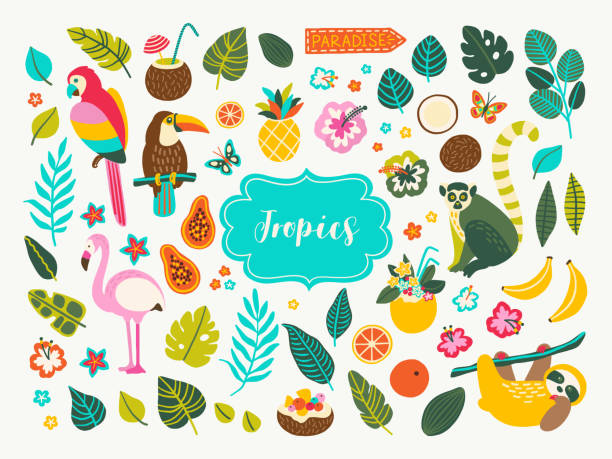 Tropical Collection Set of tropical plants and animals design elements with toucan, parrot, cocktails, leaves, jungle palms, sloth, flamingo, lemur, flowers and fruits. Perfect for summer party decorations, logos. banana drawings stock illustrations