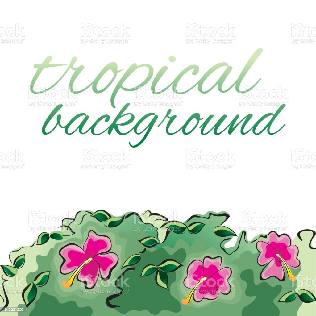 Tropical Design Template Or Border With Hibiscus Flowers Stock