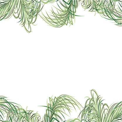 Tropical Design Template or Border With Palm Tre Leaves
