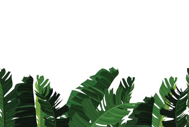 Tropical design with exotic palm leaves. vector art illustration