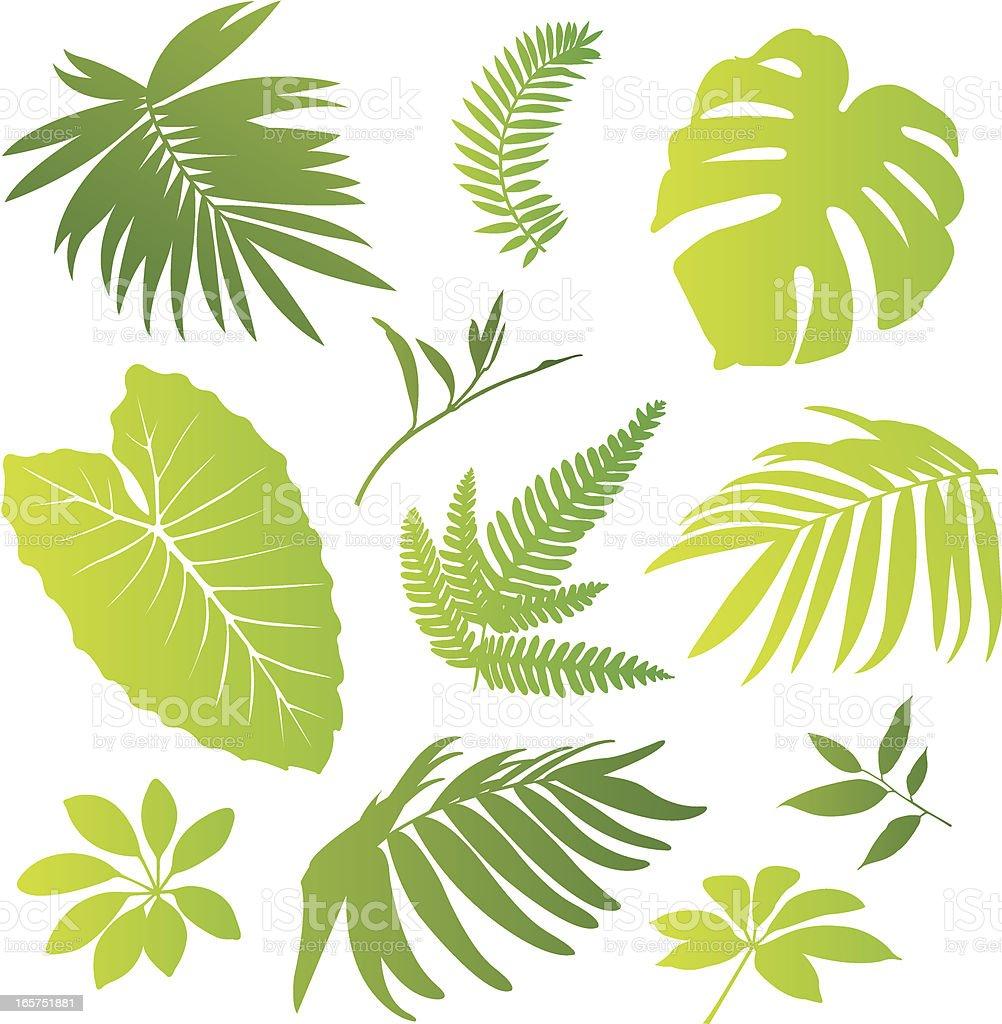 Tropical elements I vector art illustration