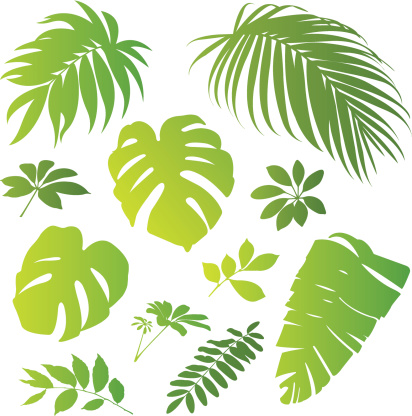Tropical elements II