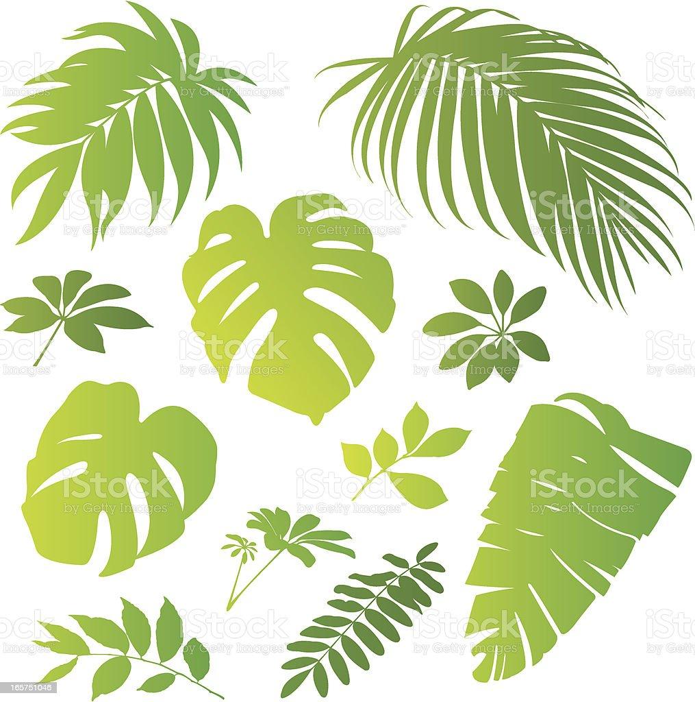 Tropical elements II vector art illustration