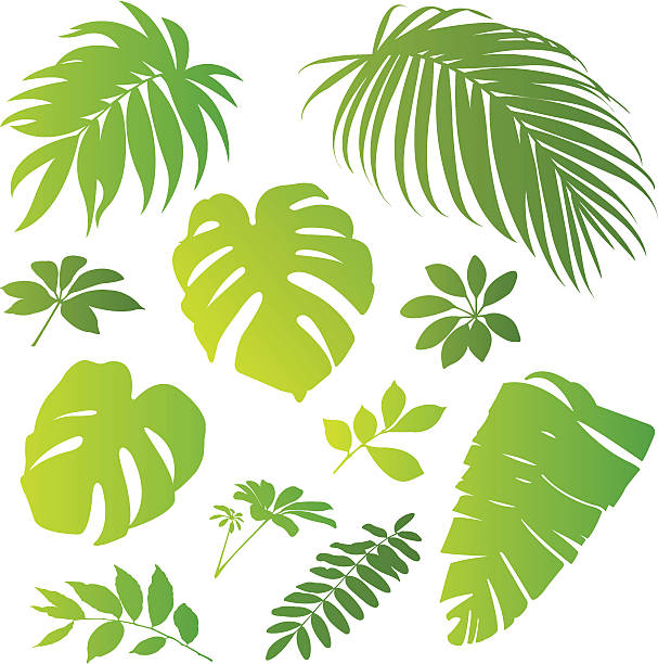 tropical elements ii - palm leaf stock illustrations, clip art, cartoons, & icons