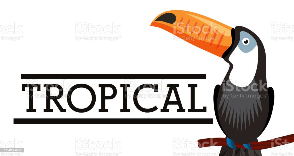 tropical toucan bird animal on branch white background vector...