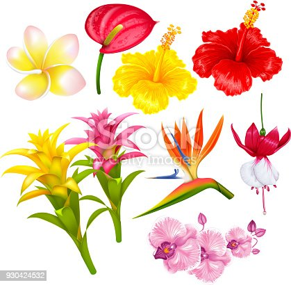 Summer tropical exotic flowers set. Vector illustration. Isolated on white background.