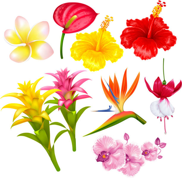 Tropical exotic flowers set Summer tropical exotic flowers set. Vector illustration. Isolated on white background. bird of paradise plant stock illustrations