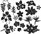 Tropical exotic flowers silhouette set