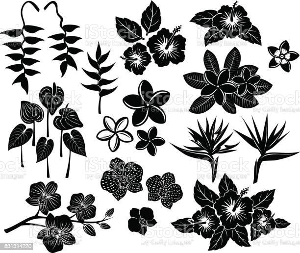 Tropical exotic flowers silhouette set vector id831314220?b=1&k=6&m=831314220&s=612x612&h=n6mabwaoj0vnxoq5k2q870rurd80tsbk4kk22nouey0=