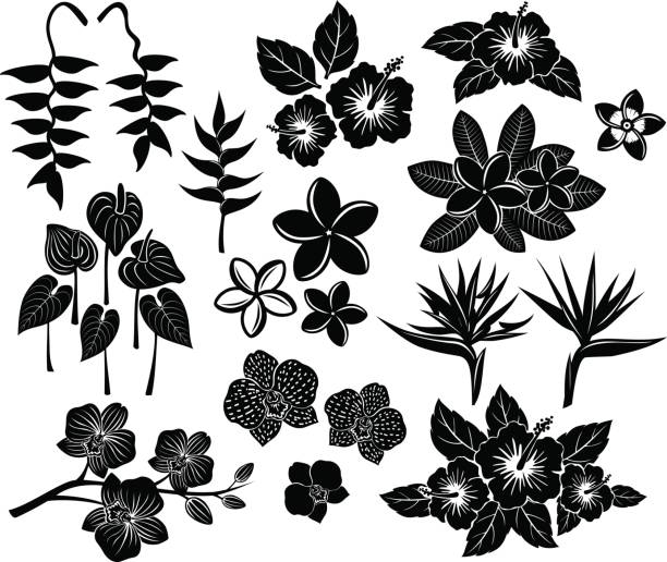Tropical exotic flowers silhouette set Tropical exotic flowers silhouette set with frangipani, bird of paradise, strelitzia, anthurium, orchid, hibiscus, heliconia bird of paradise plant stock illustrations