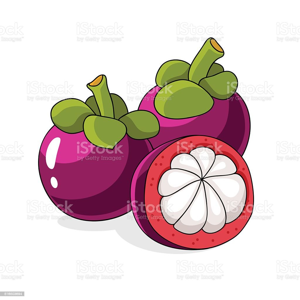 Tropical Exotic Fruit Mangosteen Stock Vector Art More Images Of