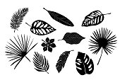 Tropical exotic leaves of palm, monstera, coconut, banana tree. Set of elements, vector illustrated, black and white, silhouette.