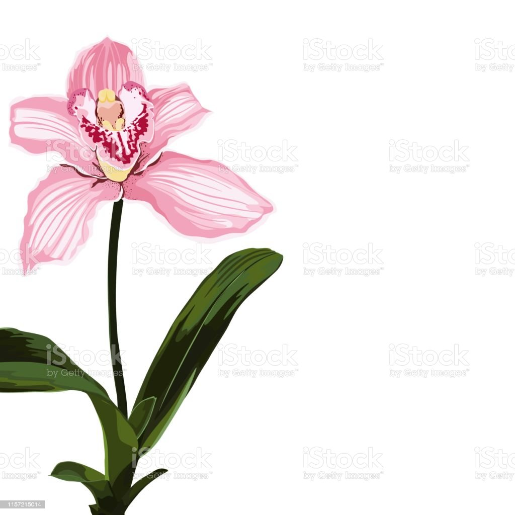 orchidee zeichnung vorlage