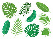 Tropical exotic plants leaves set isolated on white background.