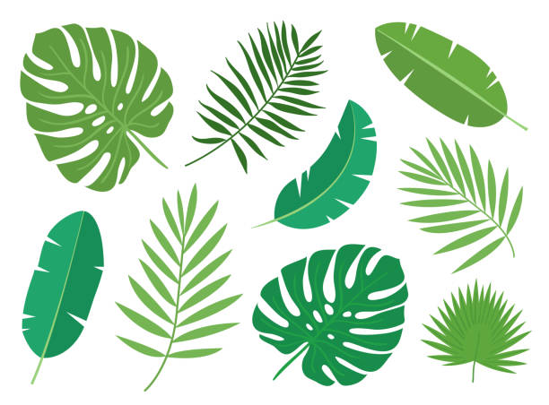 illustrazioni stock, clip art, cartoni animati e icone di tendenza di tropical exotic plants leaves set isolated on white background. - foglie
