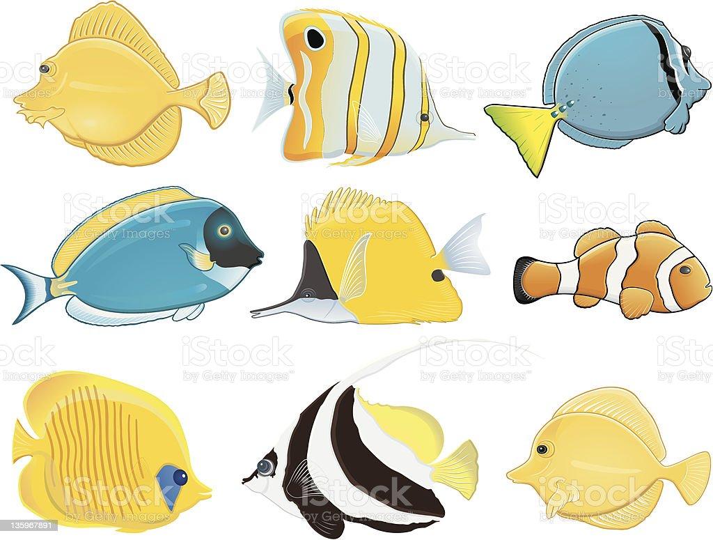 Tropical fish / Poissons tropicaux vector art illustration
