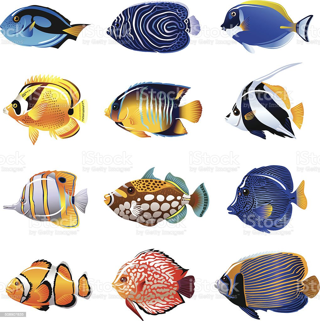 royalty free tropical fish clip art vector images illustrations rh istockphoto com tropical fish clipart images tropical fish clipart gif