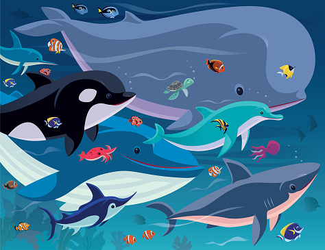 tropical fishes and sea creatures gathering