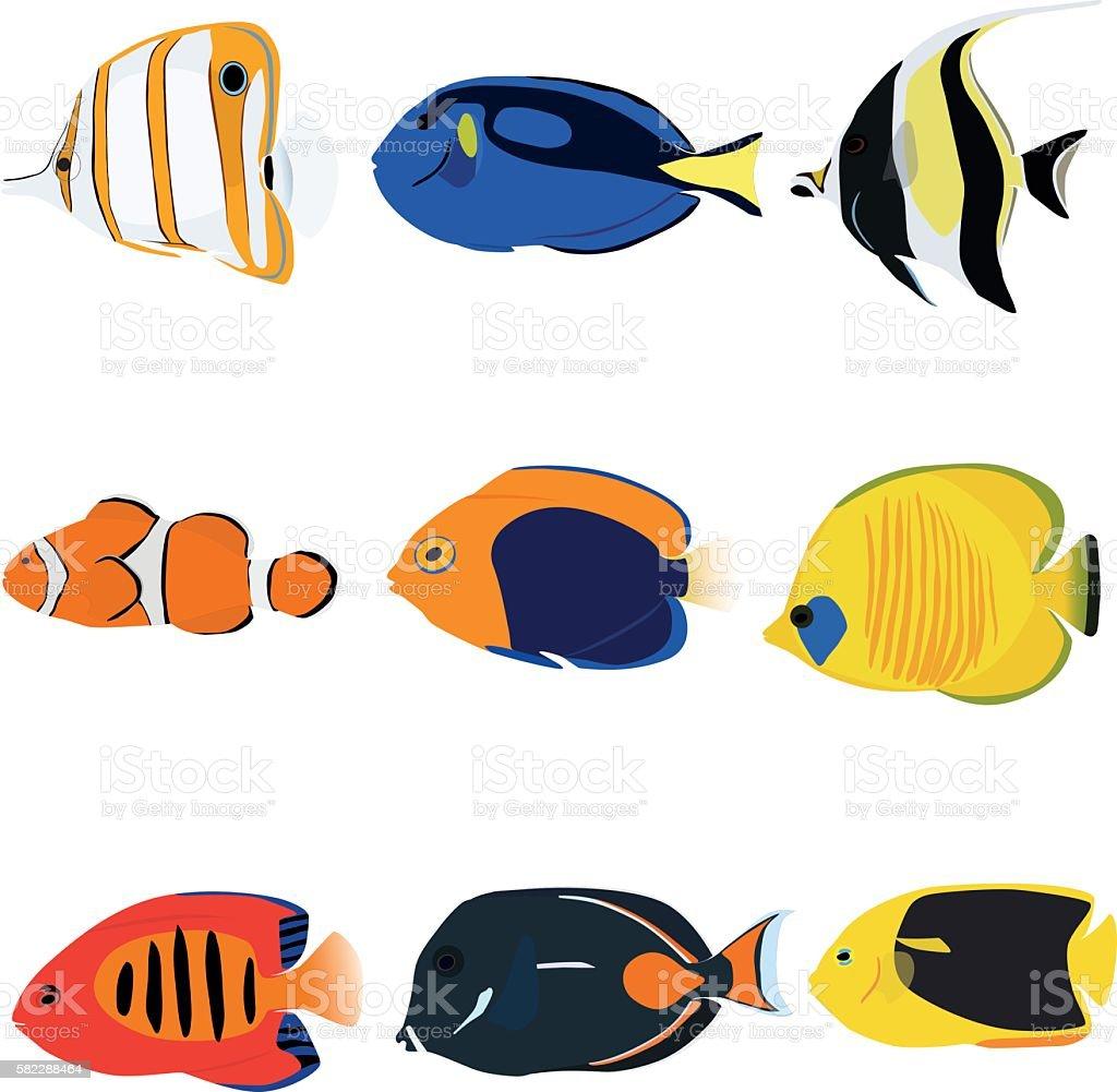 royalty free angelfish clip art vector images illustrations istock rh istockphoto com angelfish clipart angelfish clipart black and white