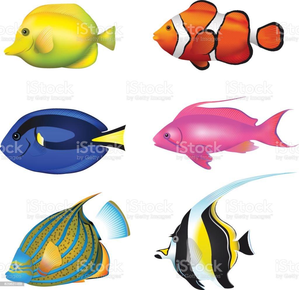 tropical fishes set zebrasoma clownfish blue tang lyretail anthias