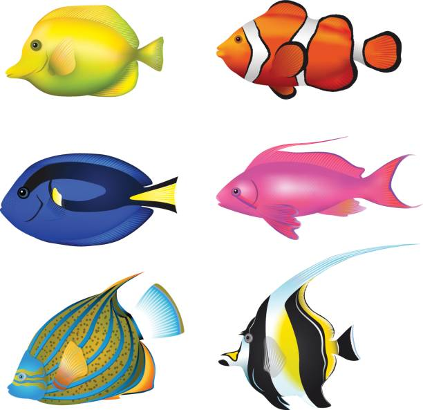Tropical Fishes Set. Zebrasoma, Clownfish, Blue Tang, Lyretail Anthias, Angelfish, Moorish Idol Vector Illustration Set. vector art illustration