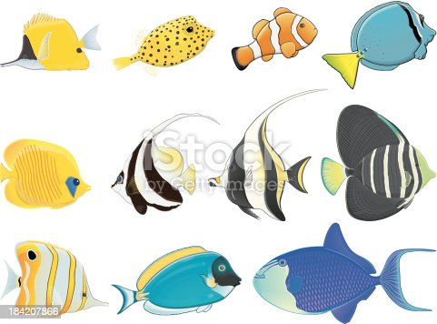 istock Tropical fishes / Poissons tropicaux 184207866
