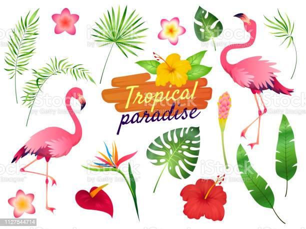 Tropical flamingos pink flamingo jungle flowers palm leaves nature vector id1127544714?b=1&k=6&m=1127544714&s=612x612&h=utipw1wvuumvnlf551hrvun9ntjyv6k6lhadcpsm8vc=