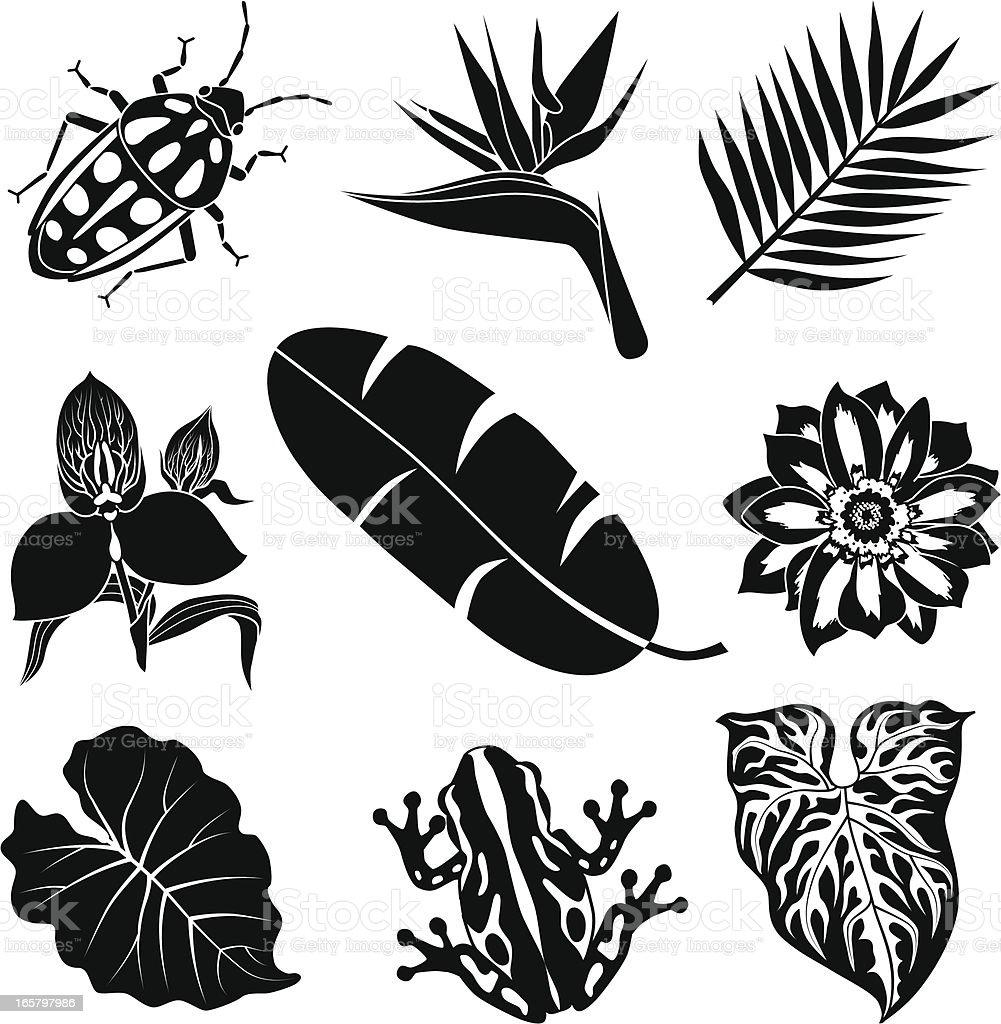 Tropischer flora und fauna – Vektorgrafik