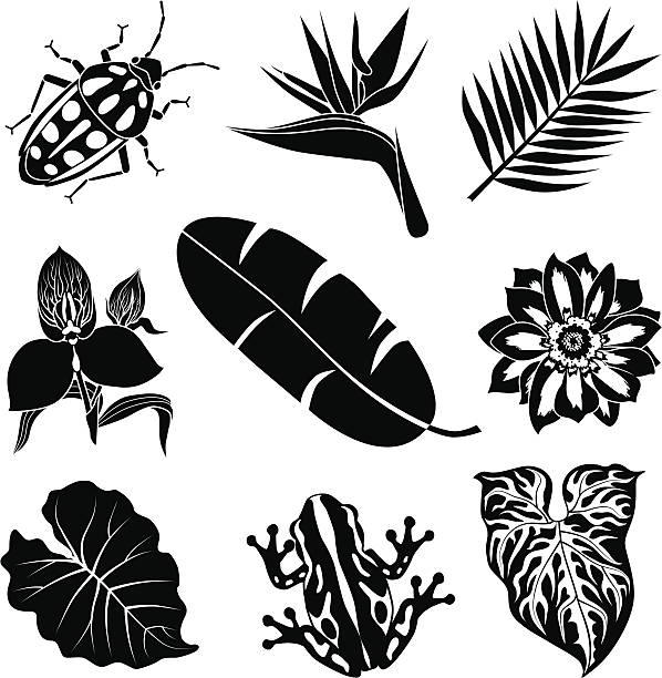 tropical flora and fauna vector art illustration