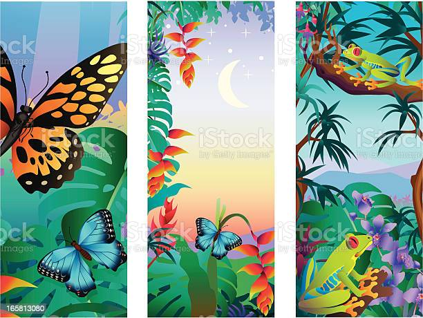 Tropical flora and fauna vector id165813080?b=1&k=6&m=165813080&s=612x612&h=nnzuqmf747slpezld3balf1yecyglqpfut32i1rywz0=