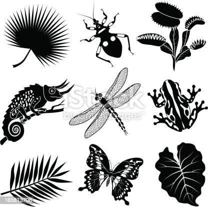 Vector illustrations of tropical flora and fauna found in the African jungle.
