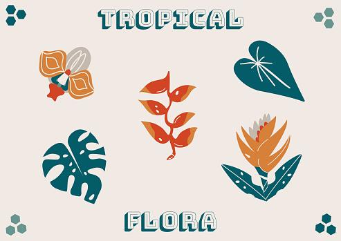 Tropical flora plants