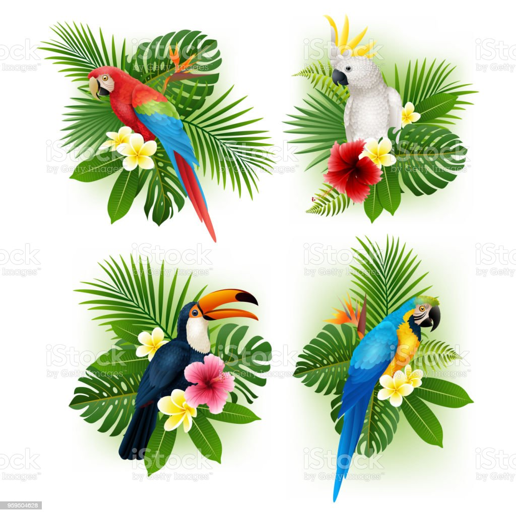 Tropical flower and bird collection set royalty-free tropical flower and bird collection set stock illustration - download image now