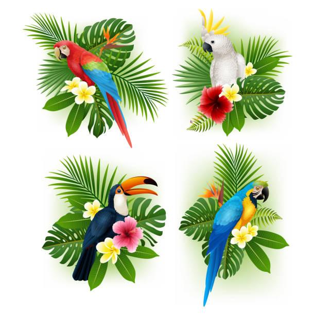 ilustrações de stock, clip art, desenhos animados e ícones de tropical flower and bird collection set - arara