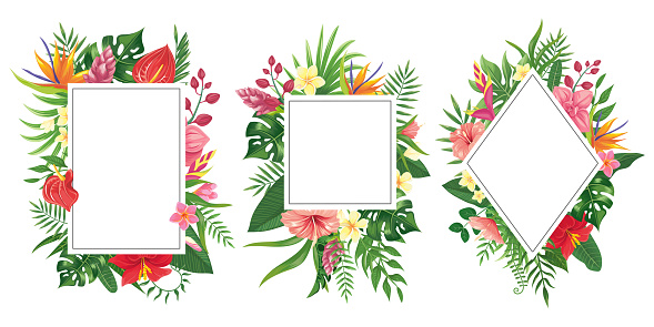 Tropical flower frames. Botanical tropics borders, tropic flowers invitation frame and summer plants green leaves vector background