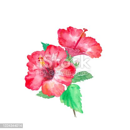 istock Tropical flower hibiscus. Watercolor illustration trace vector (changeable layout) 1224344014